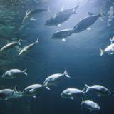 Fish in the Mediterranena